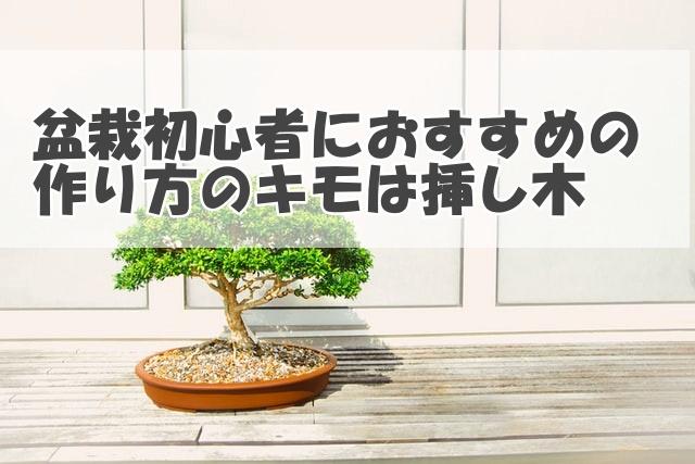 盆栽初心者におすすめの作り方のキモは挿し木